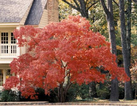 Dondehogar plantas redecorate caso 78 for Arbustos de hoja caduca